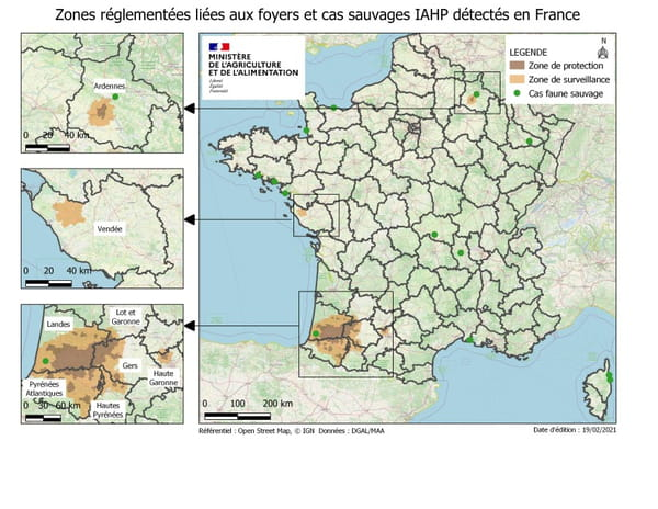 Grippe aviaire en France