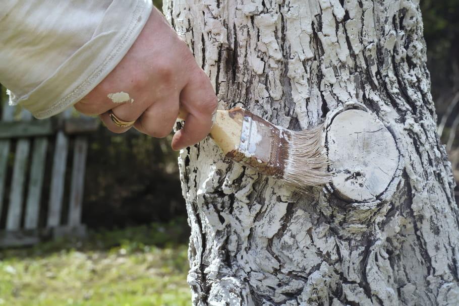 Bouillie bordelaise : fabriquer un pesticide naturel