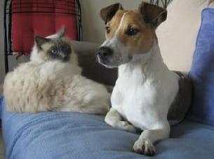 velours (sacré de birmanie) et réglisse (jack russel terrier).