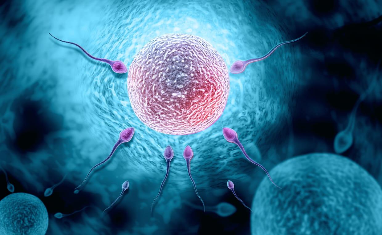 Reconnaître les symptômes de l'ovulation