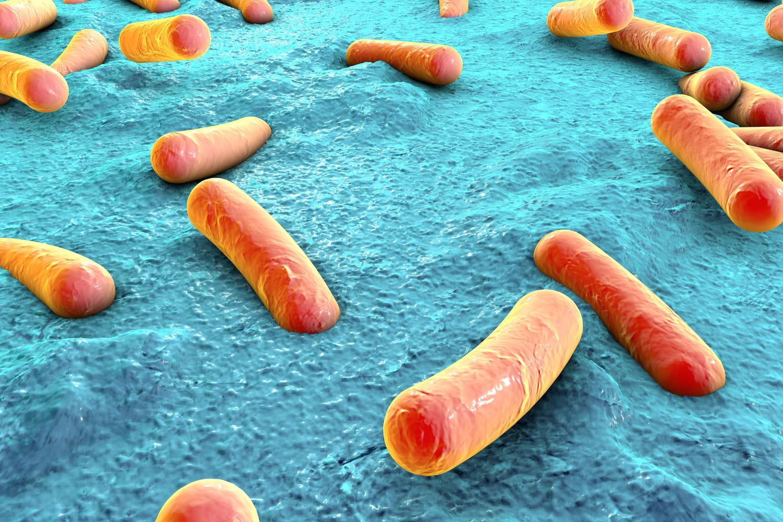 Klebsiella pneumoniae: symptômes, causes, transmission, traitement