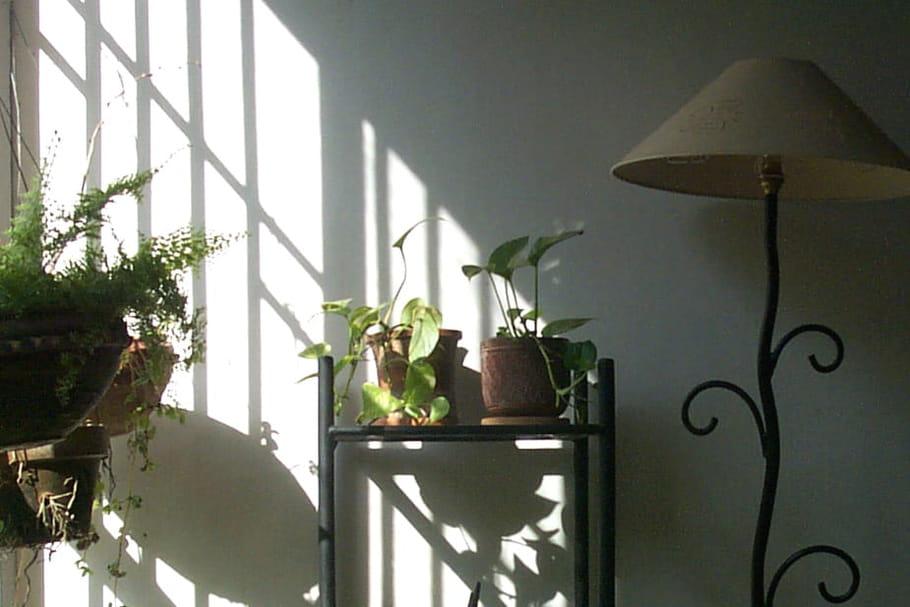 Comment rendre son intérieur plus vert et sain à l'arrivée du printemps?
