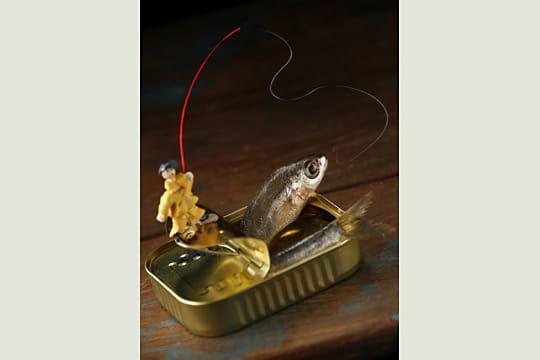 Pêche à la sardine par Dominique Flament