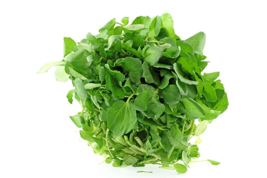 Comment rafraîchir une salade flétrie?