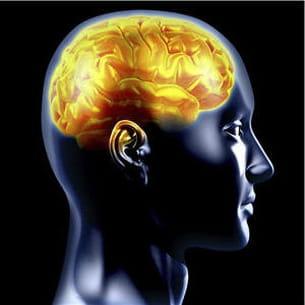 la substance grise présente dans le cerveau peut être à l'origine de ce mythe.