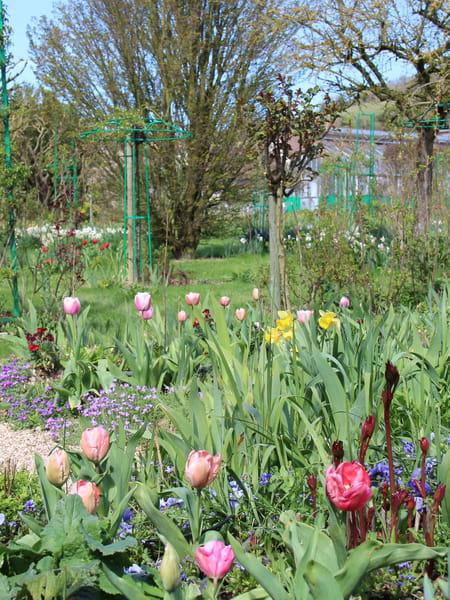 Jardin conseil pour le jardinage l 39 am nagement et la for Decoration jardin alger