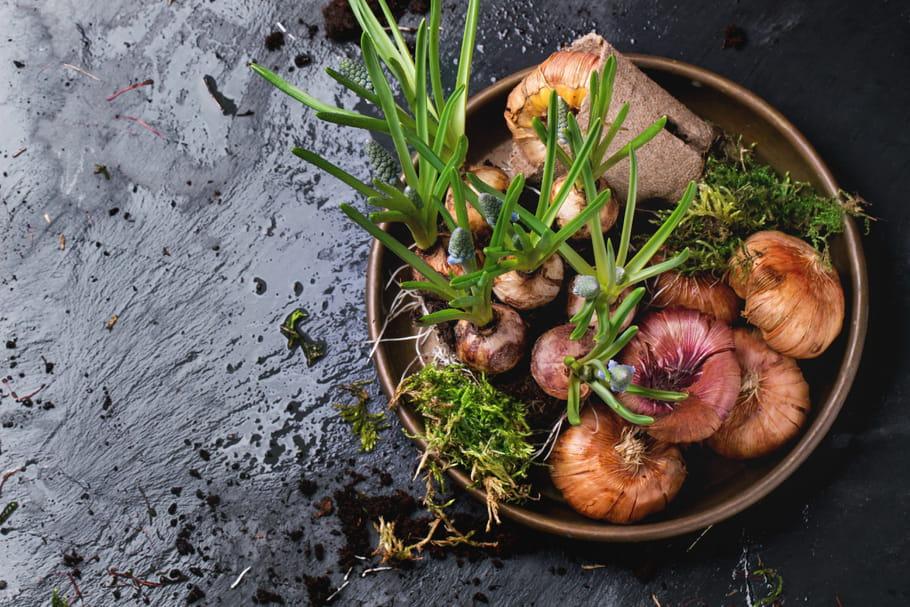 Bulbes: planter et cultiver les plantes à bulbe, saison après saison