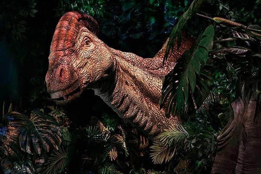 Jurassic World: l'expo qui redonne vie aux dinosaures
