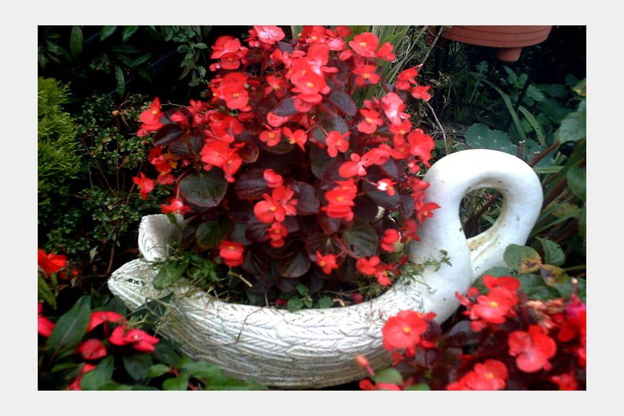 Un cygne au jardin
