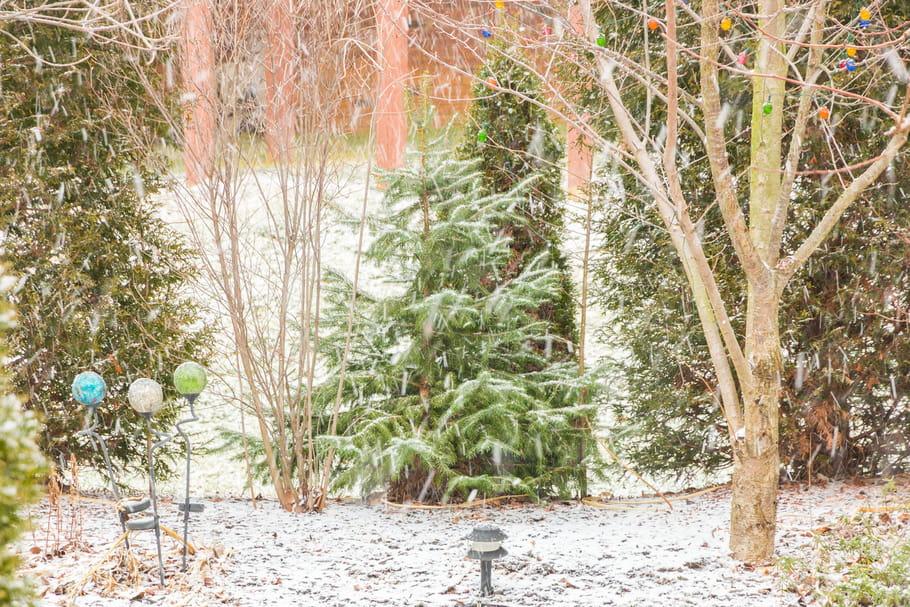 que faire au jardin en janvier On jardin que planter en janvier