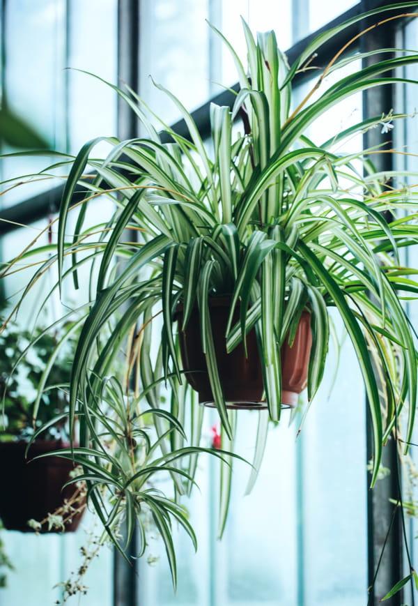 Plante Depolluante Ces Vegetaux Qui Vont Purifier Votre Interieur