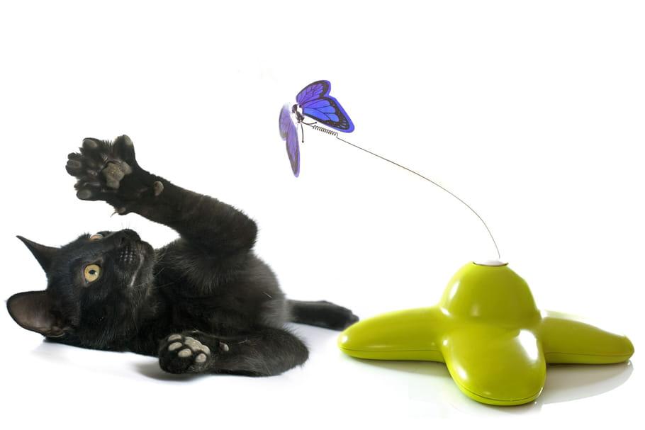 Les meilleurs jouets pour chats: les objets qu'ils adorent