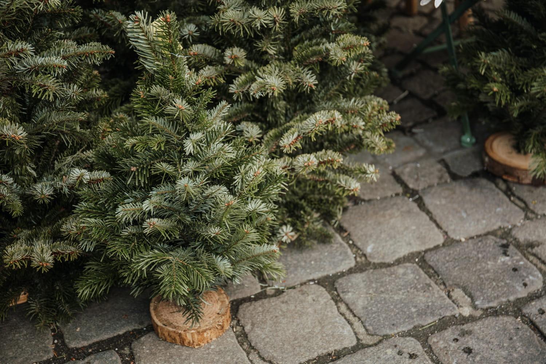 Quand acheter son sapin de Noël naturel?