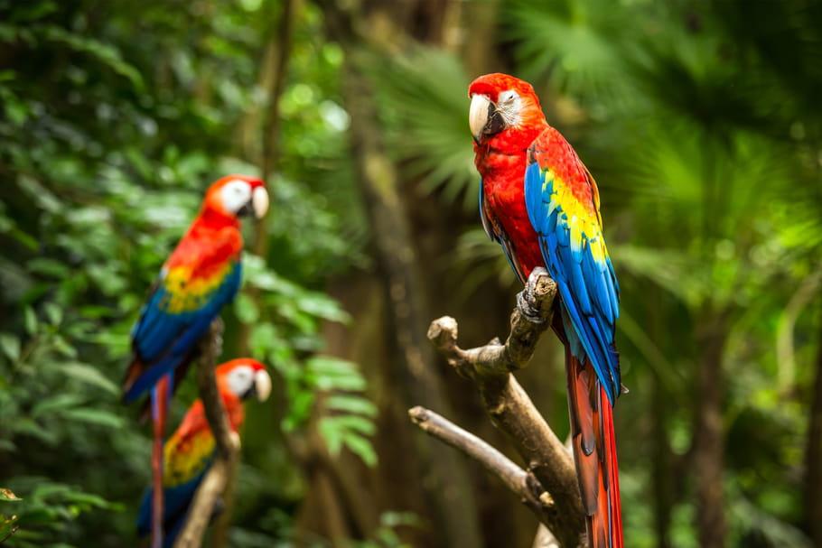 """""""Gros lard"""", """"Va te faire..."""": 5perroquets grossiers virés d'un zoo"""
