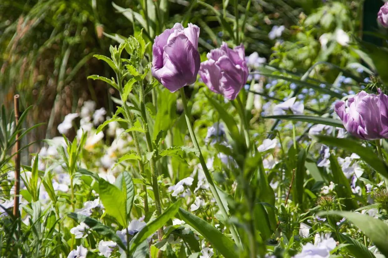 Quelles Fleurs Planter Fin Aout quelle fleur planter selon les saisons ?
