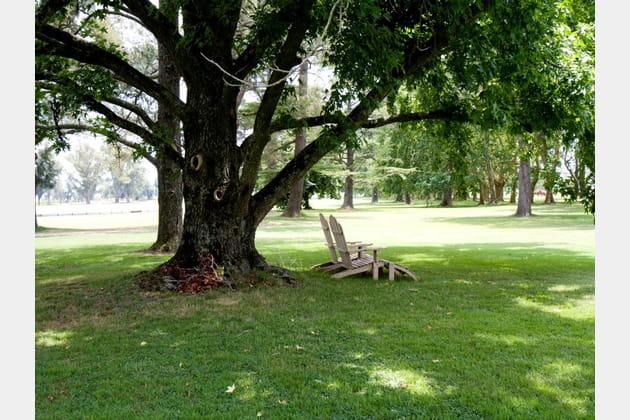 Chaises longues sous un chêne centenaire