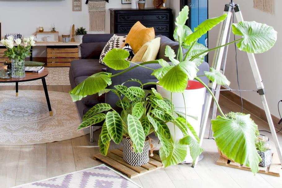 Comment prendre soin de ses plantes d'intérieur?