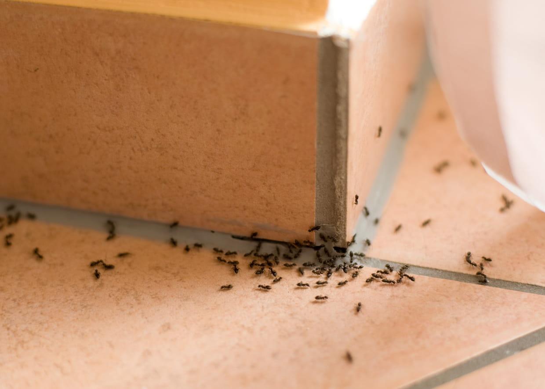 Comment Traiter Les Mites Dans Les Armoires se débarrasser des insectes de la maison