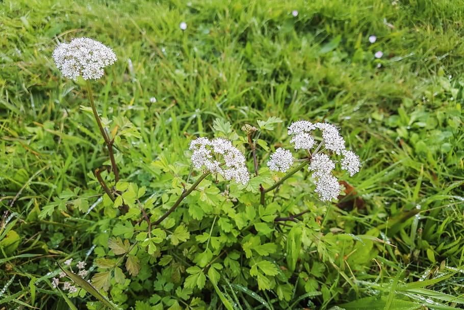 Confusion de plantes: plusieurs cas d'intoxications graves
