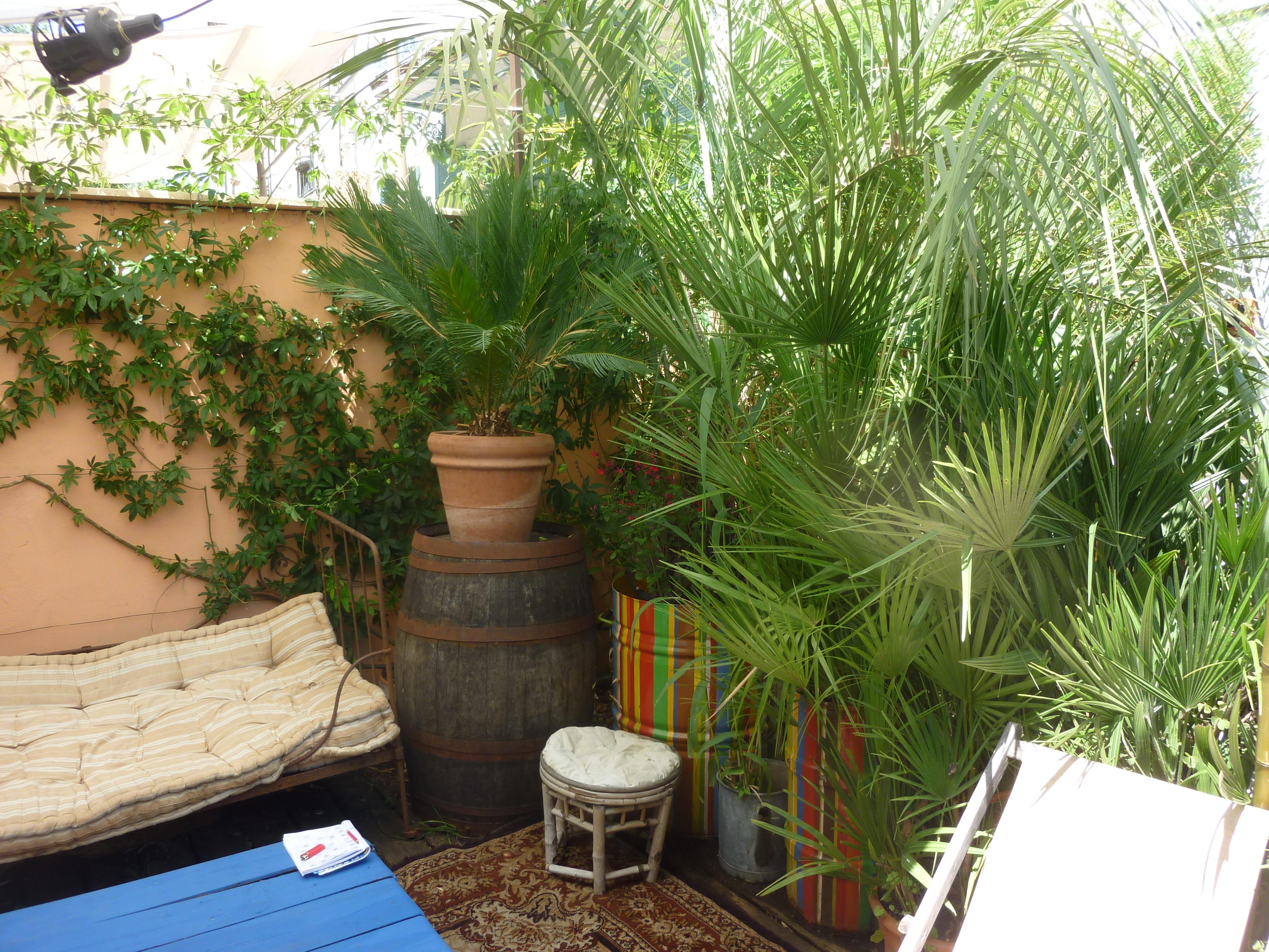 Arbre En Pot Terrasse 8 plantes exotiques pour le balcon