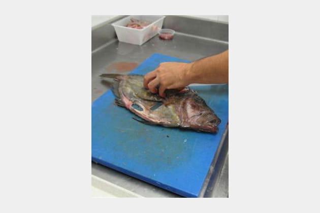 Le poste poisson