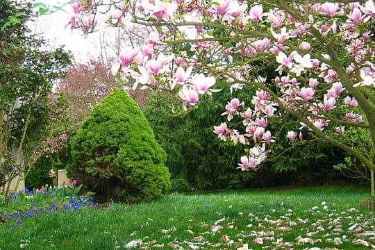 Au paradis des fleurs for Le jardin de catherien