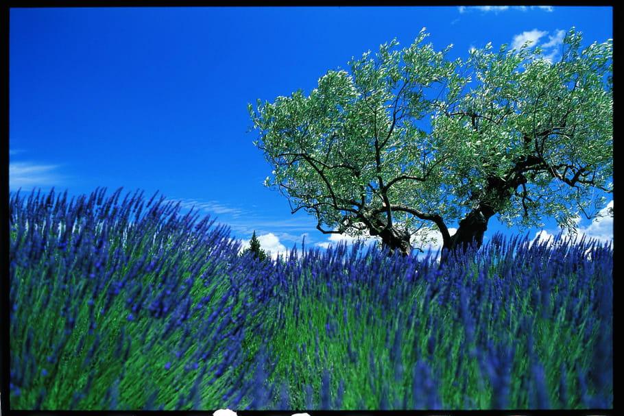 L'Occitane, voyage sensoriel au cœur de la Provence