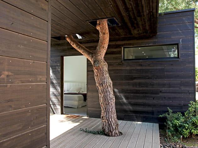 Un arbre dans la maison