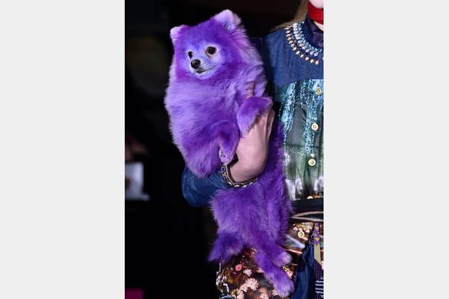 Le chien violet du défilé Manish Arora