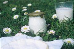 la plupart des produits laitiers contiennent des probiotiques. ce sont les