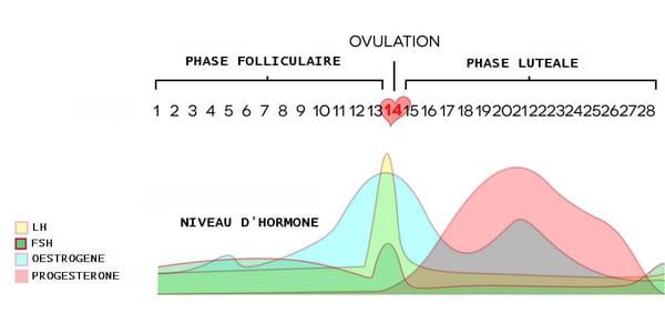 courbe ovulation température