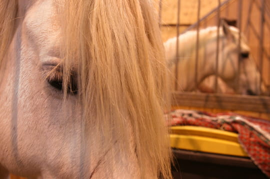 Le cheval blanc d'Henri IV