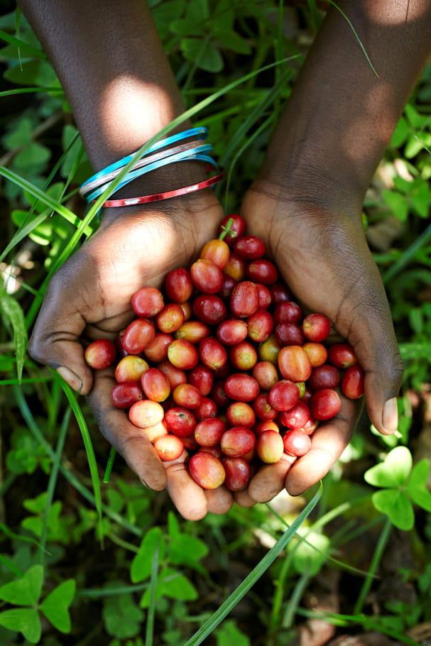 Umumita wa Lake Kivu : un café doux
