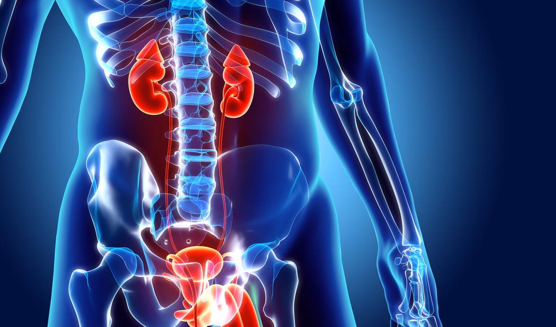 Prostatite aigue ou chronique : symptômes et traitements