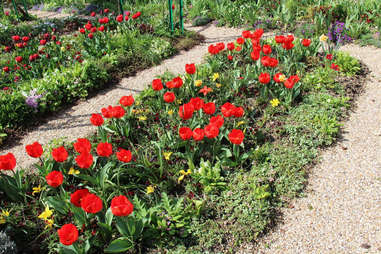 Floraison en mars