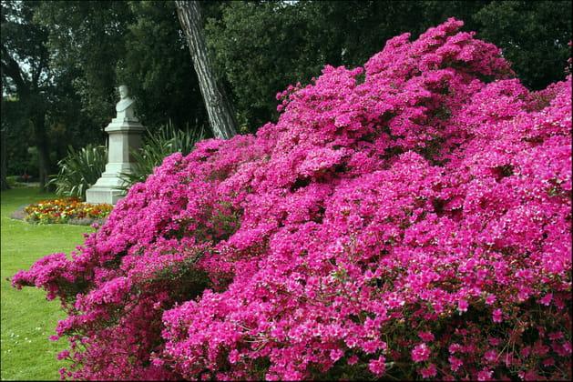 Un jardin fleuri for Au jardin d emmanuel