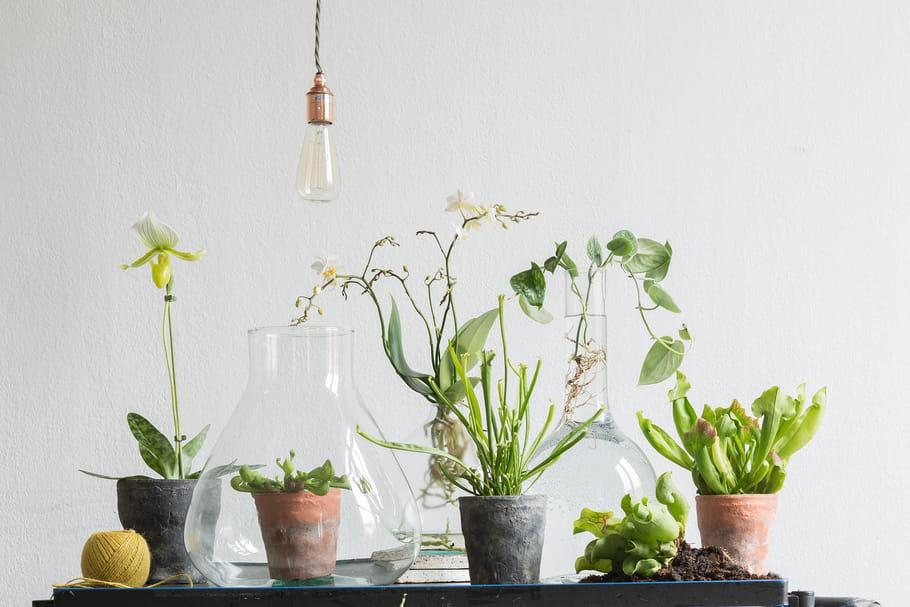 Ces plantes d'intérieur qui sont tendance