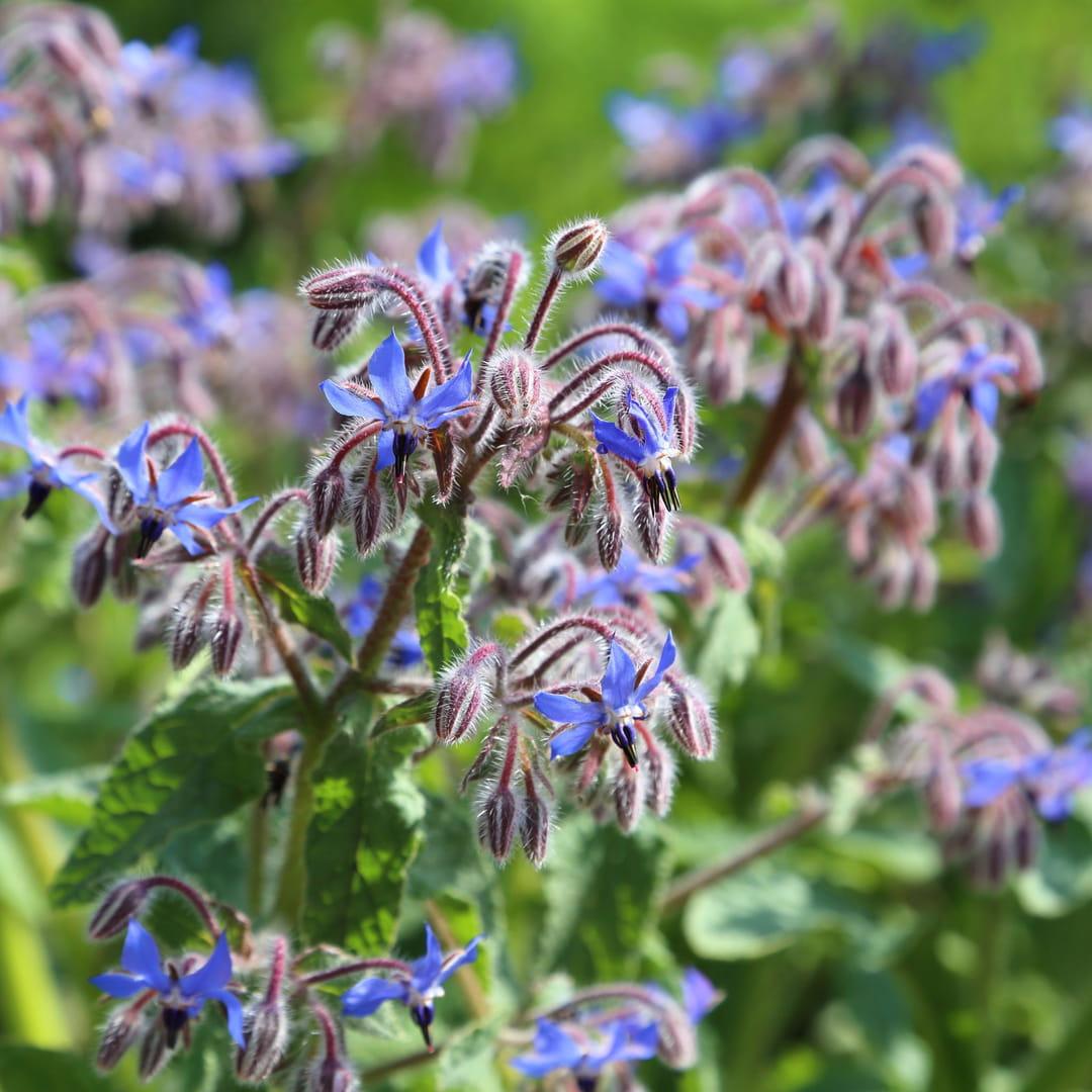 10 fleurs qui poussent presque sans eau - Fleurs d ete plein soleil ...