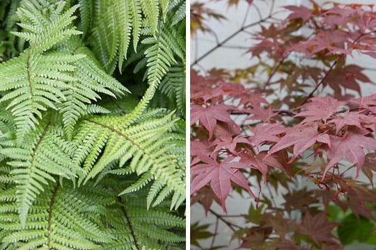 Duo de feuilles