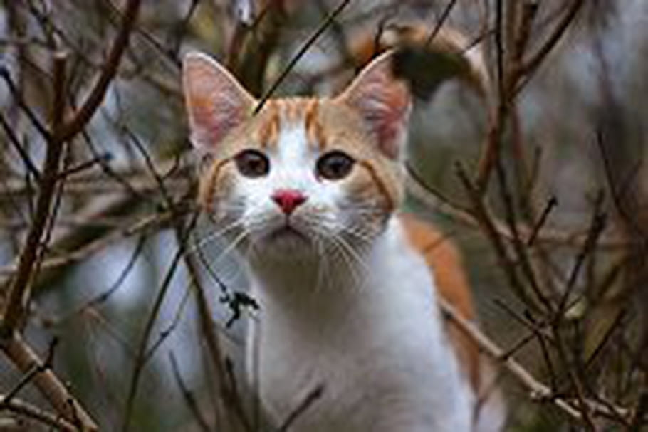 Les chats du jardin des halles cherchent des familles d - Solution pour eloigner les chats du jardin ...