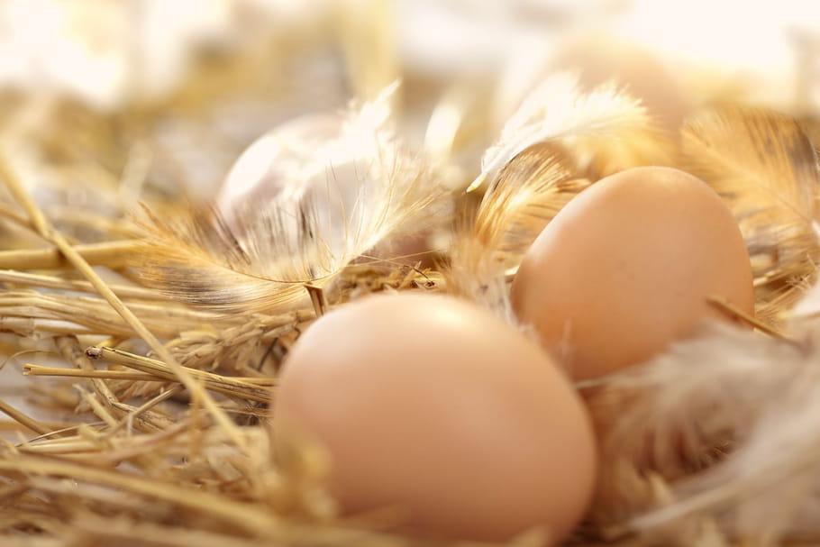 Fipronil: aucune trace dans les œufs produits en France