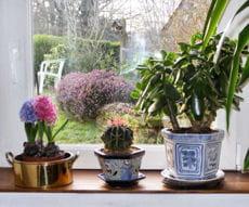 plantes d'intérieur placées derrière une vitre