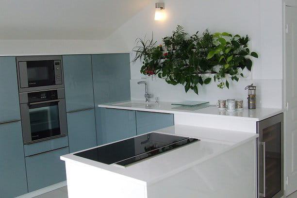 Des plantes pour sublimer sa cuisine - Plante pour cuisine ...