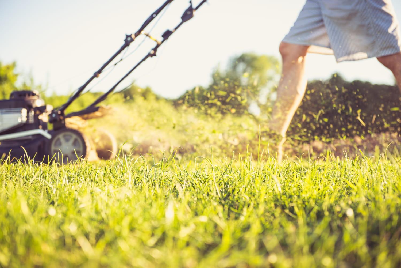 Tondre en mulching: les conseils pour se lancer!
