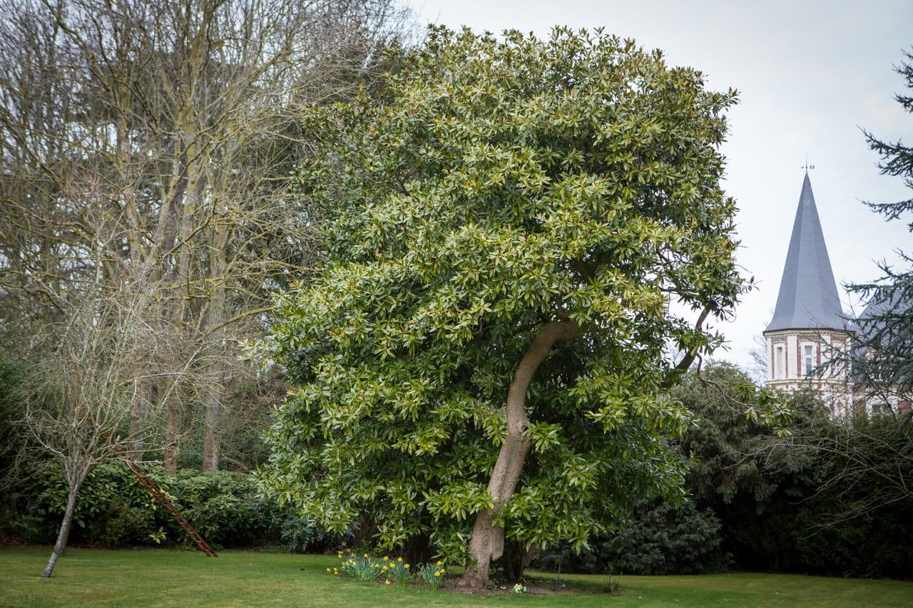 quel arbre original planter dans le jardin ?