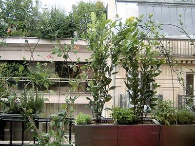 décor végétal.