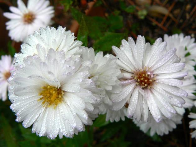 Des fleurs d'automne qui égayent les jardins