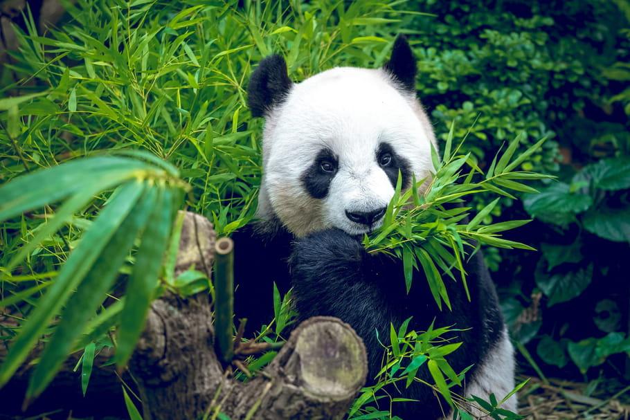Zoos et parcs animaliers