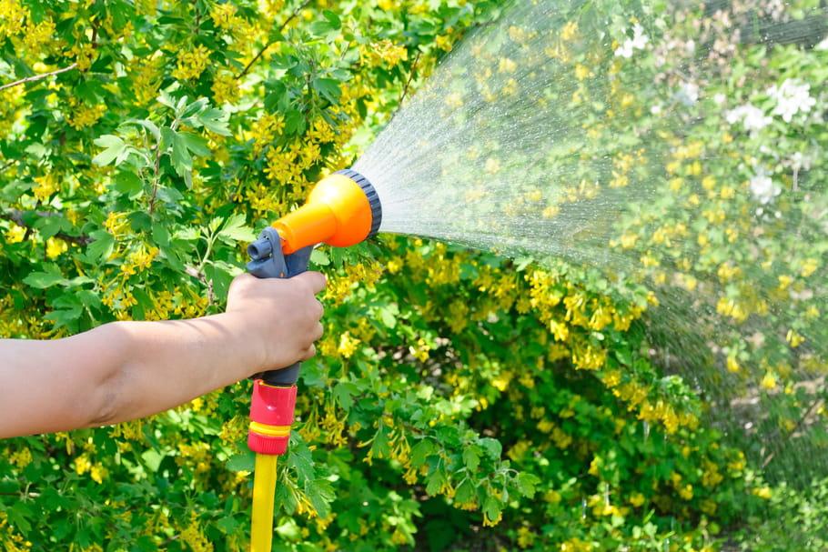 Arroser son jardin: les règles à respecter pour un bon arrosage