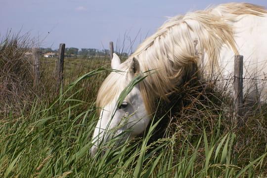 Caché dans l'herbe